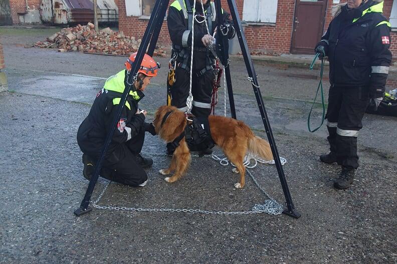 Ovelse-Hejse-med-hund-okt-2020-4